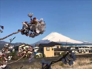 富士山&桜.jpg